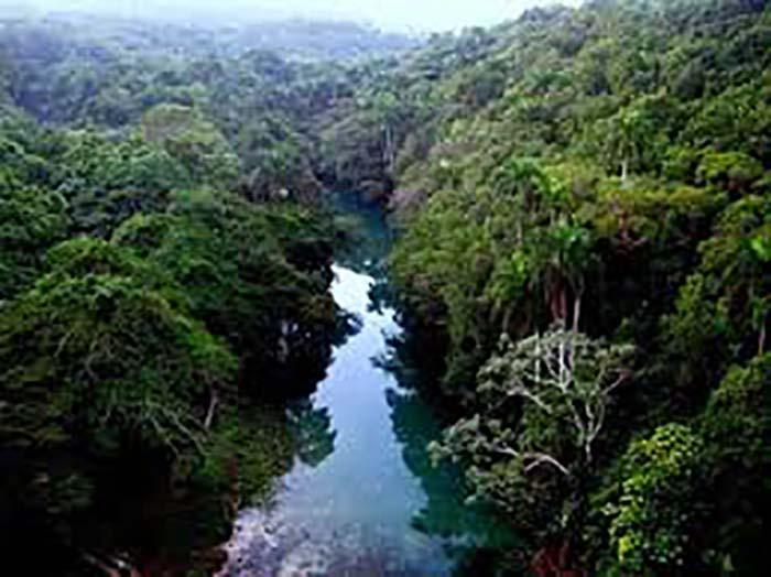 Cuba's sustained forest growth