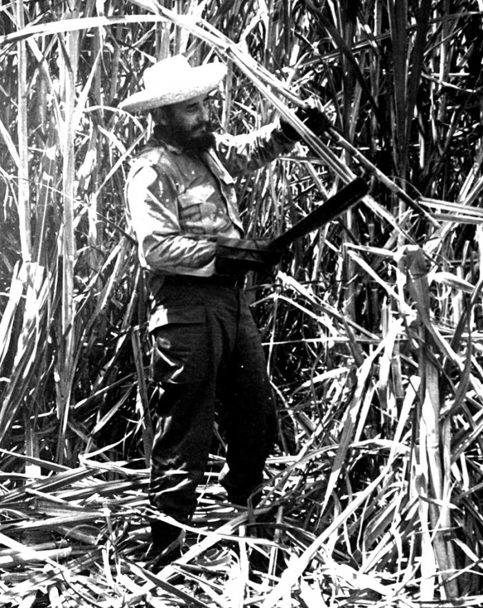 Cutting cane with a voluntary work brigade.
