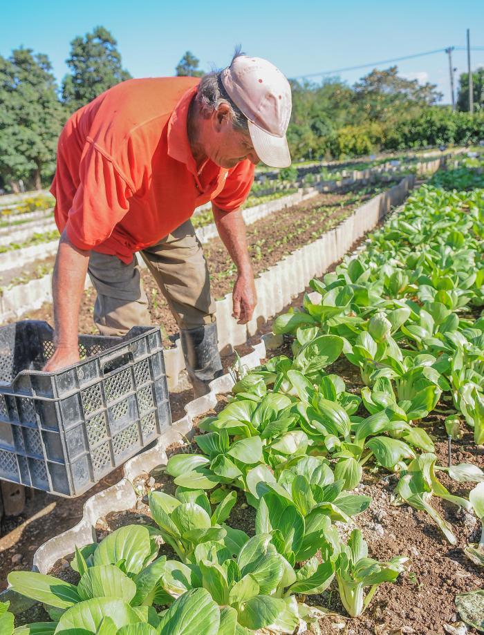 Urban agriculture advances