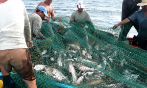 Fishing can only be carried out by individuals or legal entities licensed for the purpose.